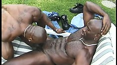 Muscled black stud has a hot ebony guy blowing his massive stick